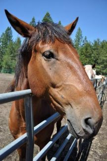 Tahoe Donner Equestrian Center is changing the face of area riding lessons and events.