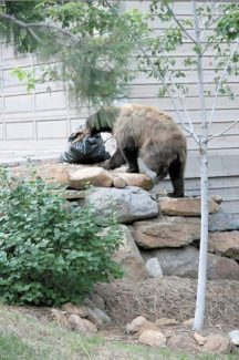 A bear gets into a bag of trash outside an Incline Village home in this file photo.