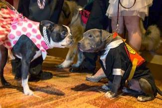 More than 100 dogs and 350 guests dressed up and partied down to help homeless pets.