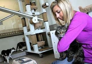 HSTT Volunteer Program Manager Erin Ellis, introduces Marco to his new home while awaiting adoption. The agency's new shelter provides spacious cat rooms that provides places for cats to play, nap and relax.