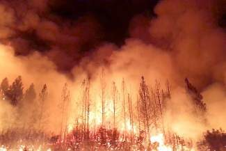 Researchers are finding that plants commonly found in drier, southwestern climates are replacing vegetation burned in Lake Tahoe-area wildfires.