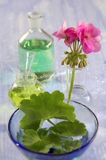 Geranium essential oil can help with heart, liver and emotions.