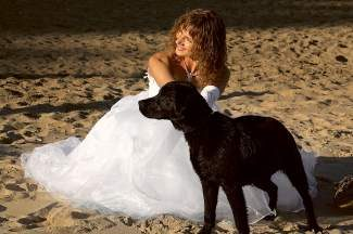 Before you engage Fido for a wedding participant, take his temperment into account.