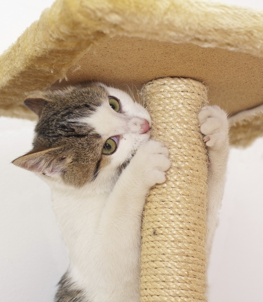 how to stop a cat chewing stitches