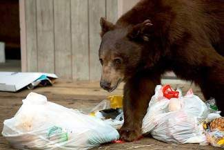 Taking proper care of your trash can help reduce the number of human-bear interactions at Lake Tahoe.