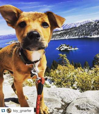 My mom took me to a pretty place where I live today. I sure love Tahoe! Submitted using #TahoeSnaps.