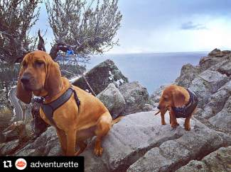 Happy #NationalPuppyDay from the pups of #Adventurette. Submitted using #TahoeSnaps on Instagam.