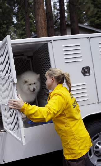 Washoe County Animal Control Officer Heidi Mittelstaedt rescues Zephyr, a 6-year-old Samoyed, as part of the mock drill.
