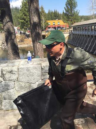 A California Department of Fish and Wildlife employee rushes to get a caught fish near Fanny Bridge into a holding tank for transportation Tuesday.