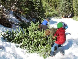 courtesy david antonucci - Boy Scout Christmas Trees