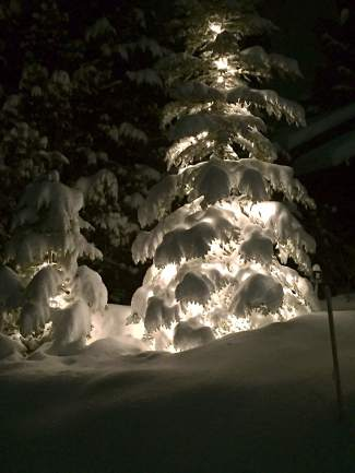 Tree of Light: Snow weighs down a decorated tree in Tahoe Vista after a storm.