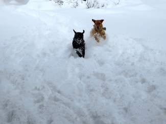 Snow Rompers: Hali and Gus get some fresh tracks after a recent storm.