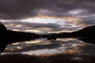Angler's Life: A fishing boat is pictured on Donner Lake in the wee hours of morning.