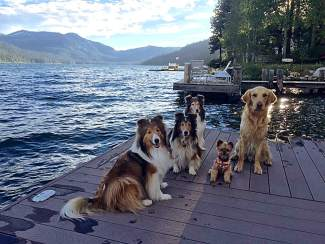 Dog Party: This group of BFFs (Best Furry Friends) celebrate the Summer Solstice on June 20 at Donner Lake. Shelties Chloe, Liam and Kenzie are joined by their little friend Coco the Yorkie and Sherman the Golden Retriever.