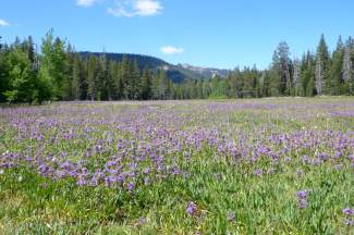 Try these 5 wonderful wildflower hikes at Lake Tahoe-Truckee