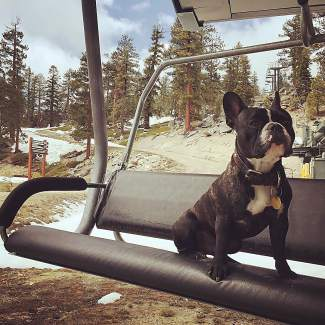 Six more months Dexter, six more months. Submitted using #TahoeSnaps on Instagram.