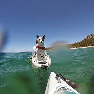 Was a casual day on the water with our least favorite dog! Nice ride over to Zephyr Cove while trying out our Seadek paddling on the back of our kayaks to give dogs more grip. As you can see, he's all good with it. Submitted courtesy of #TahoeSnaps on Instagram.
