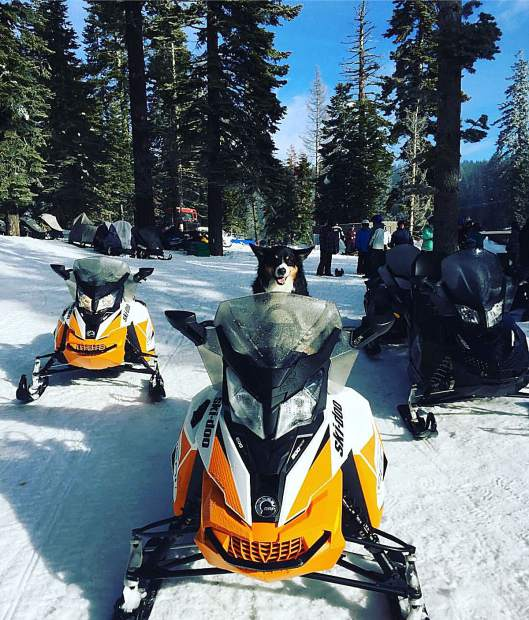 Ready to Roll: Radar the dog is the newest guide at Tahoe Snowmobile Tours. Photo: Sandy Goetz