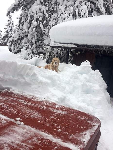 Patiently Waiting: Dave the dog watches as his owners shovel the snow off their Tahoe Donner hot tub on Feb. 6. Photo: Josie Tang