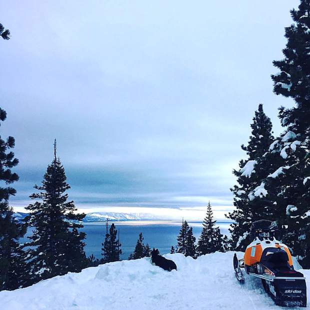 On The Lookout: Radar the dog enjoys the view of Lake Tahoe in early February from Brockway Summit. Photo: Sandy Goetz