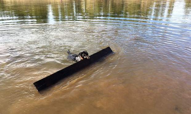 Get The Stick: For Robby the dog, nothing is too big to fetch out of Prosser Creek Reservoir, seen here this past November. Photo: Jim Wholey