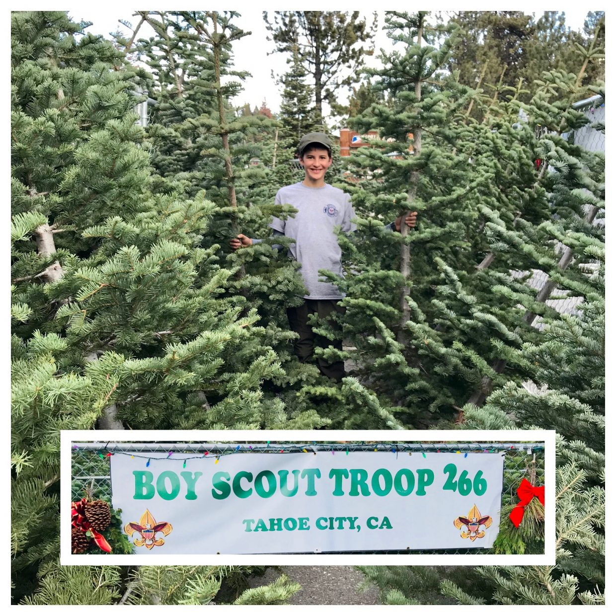 boy scouts selling christmas trees in tahoe city - Boy Scout Christmas Trees