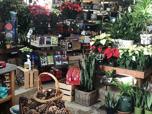 Head to Villager Nursery to find lovely gifts for your loved ones this season as well as some great plants to decorate your own home.