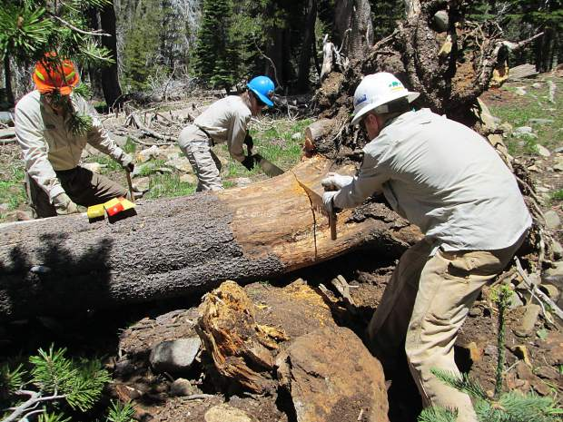 Volunteers clear a tree using handsaws in Desolation Wilderness.