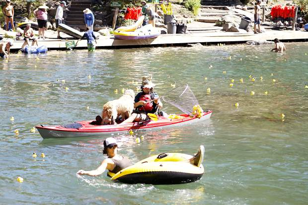 Rubber ducks float downstream during the Truckee Duckee Derbee on Sunday, June 24.