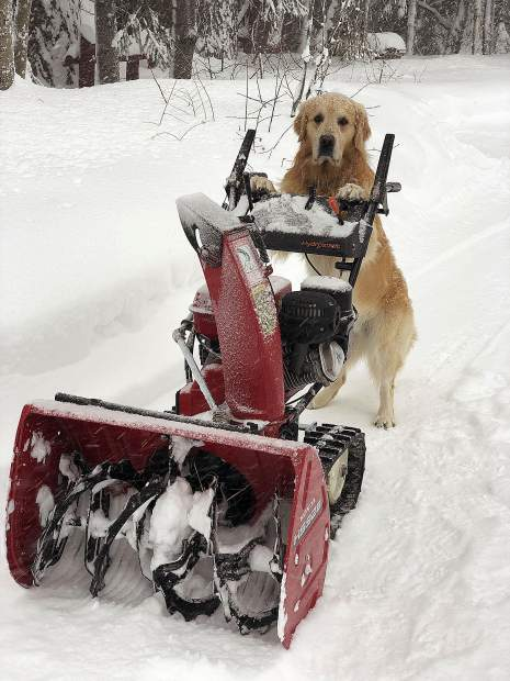 "The snow came down so fast I had to have my 4 year old golden retriever ""Jaxon"" help with snow removal."