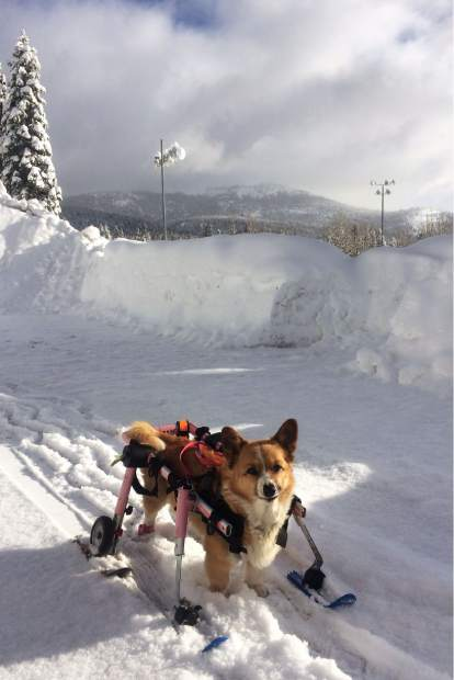 Jaxon can run the snowblower, but Idgie is shredding groomers at NT Regional Park.