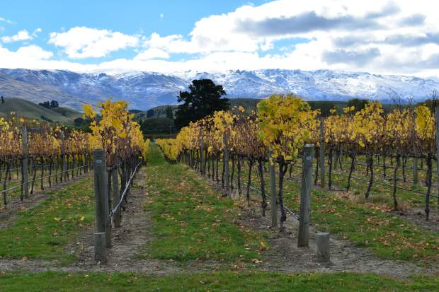 Central Otago, on New Zealand's South Island, which is literally half a world away from Burgundy, features a cool climate and a southernly latitude that allow the region to produce stunning wines from pinot noir and chardonnay grapes.