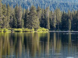 Truckee Donner Land Trust awarded more than $750,000 for forest health work