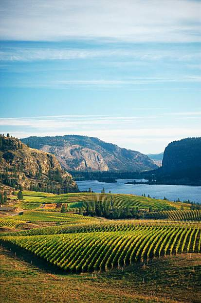 The Okanagan wine region features some of the most scenic vistas in the world of wine with many vineyards fronting a series of lakes that mark regions.