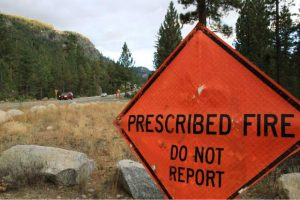 Thinning forests, prescribed fire before drought reduces tree loss