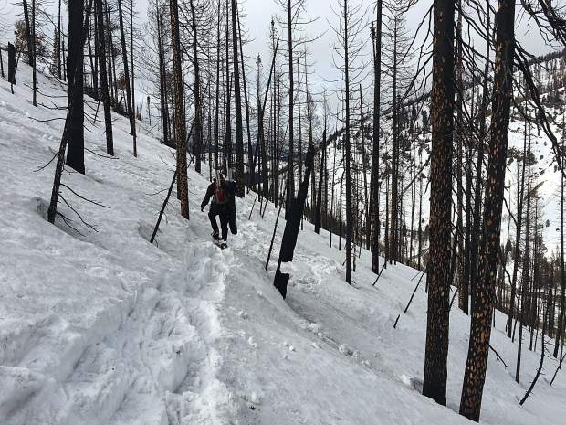 Burned forests shed soot and burned debris that darken the snow surface and accelerate snowmelt for years following fire, the study shows.