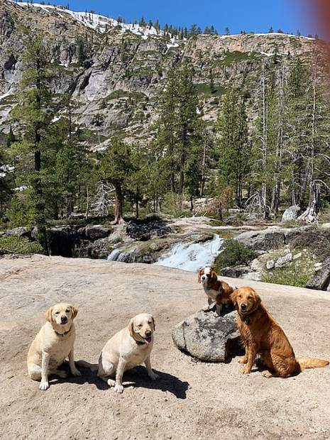 Local dogs hiking Shirley Falls at beautiful Squaw Valley.