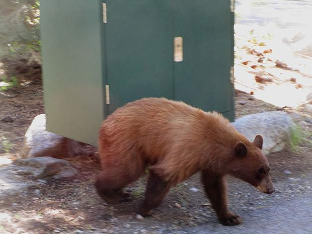 A morning visitor at the Donner Lake Inn B & B.
