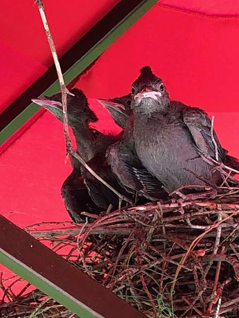 This new family built their nest under the umbrella and are ready to go.