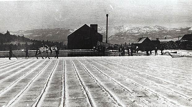 Ice being harvested by Trout Creek Ice Company, circa 1905.