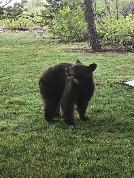 Looking for a snack in Tahoe Vista.