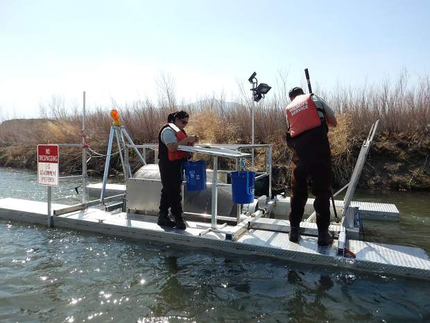 Crews from the U.S. Fish and Wildlife Service operate a screw trap on the Truckee River.