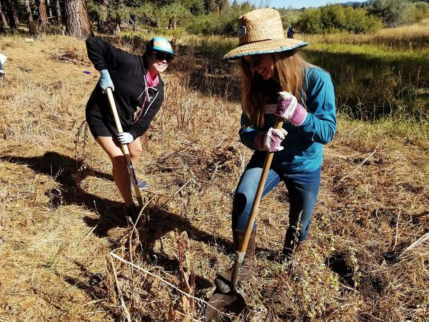 Invasive weeds are removed by volunteers in Johnson Meadow on Saturday, Sept. 21.