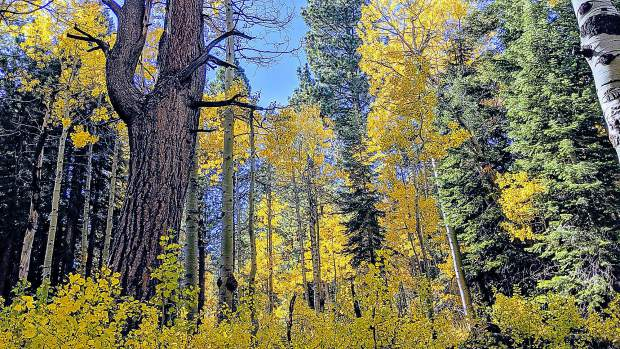 Truckee colors.