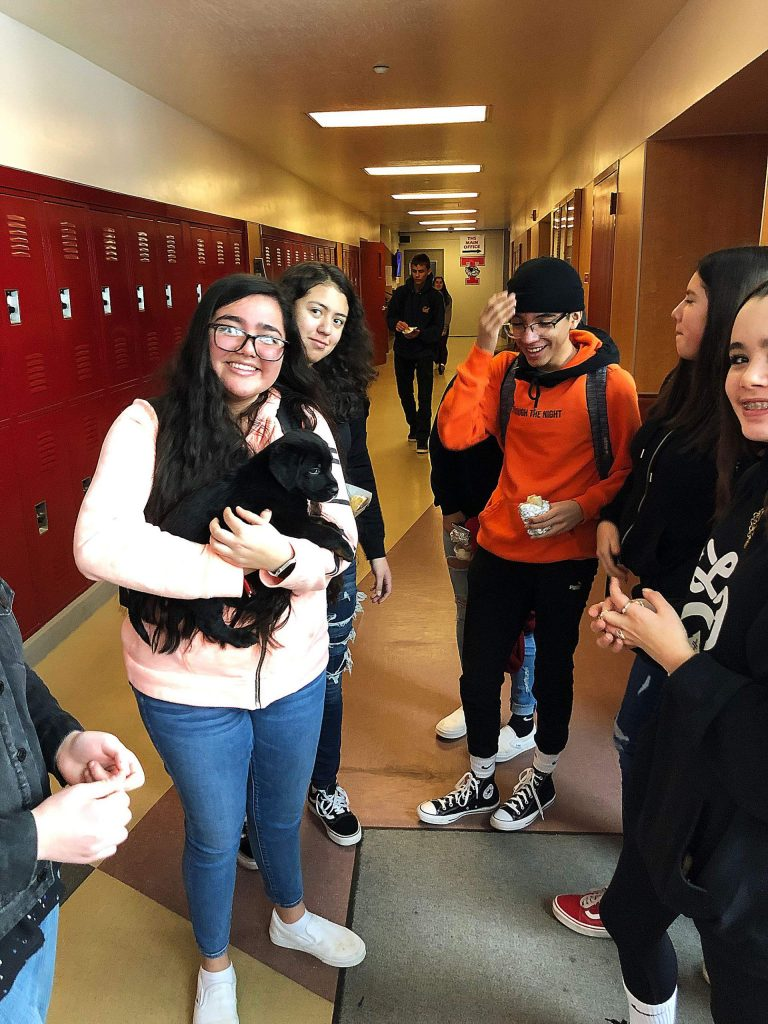 Puppy therapy at Truckee High (thanks to the Humane Society) to help reduce finals anxiety!
