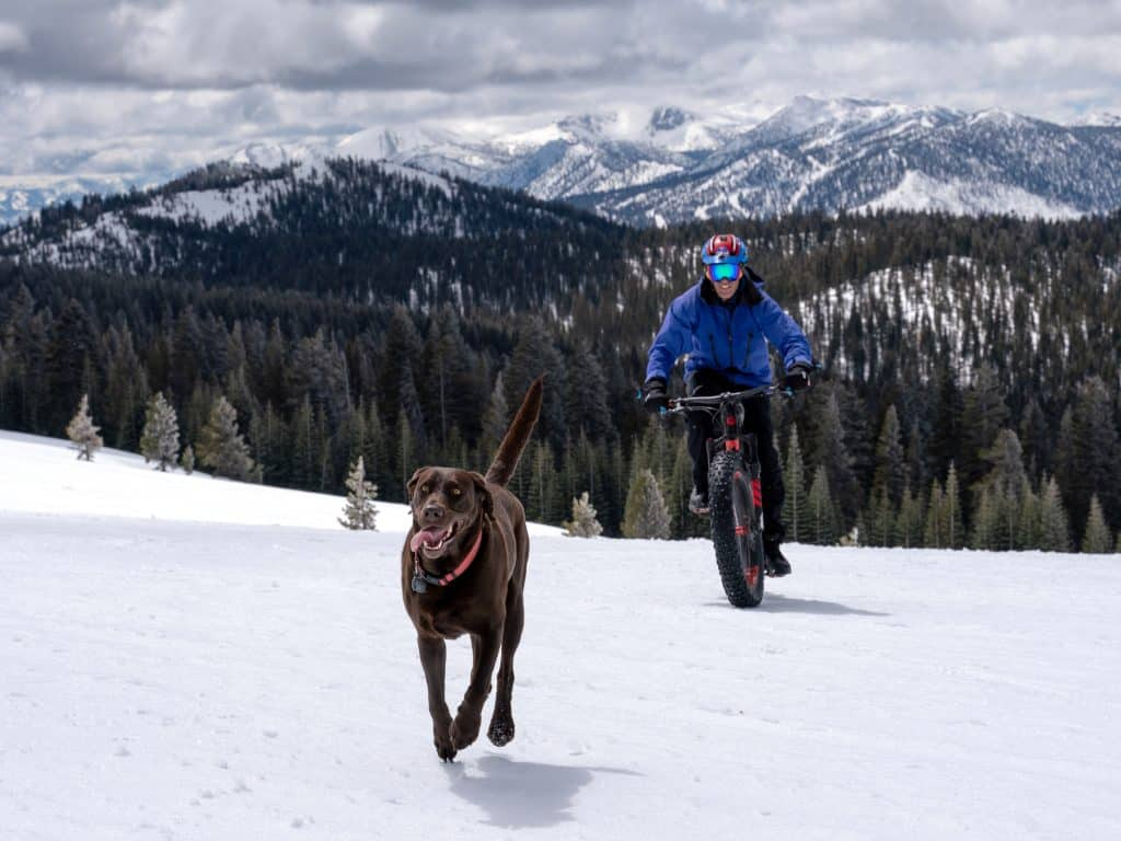Anthony Cupaiuolo, riding a fat bike, follows his dog Emmie in the Sierra Nevada.