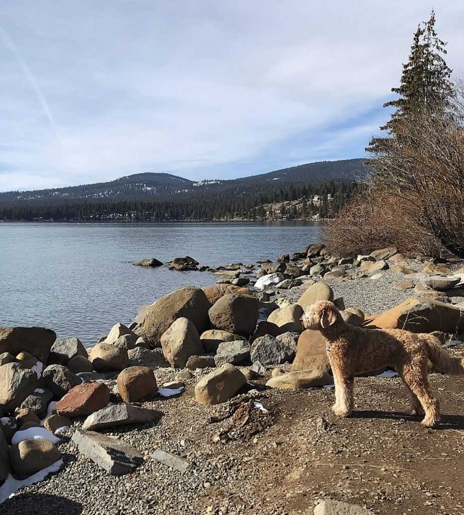 Sophie enjoying beautiful Tahoe!