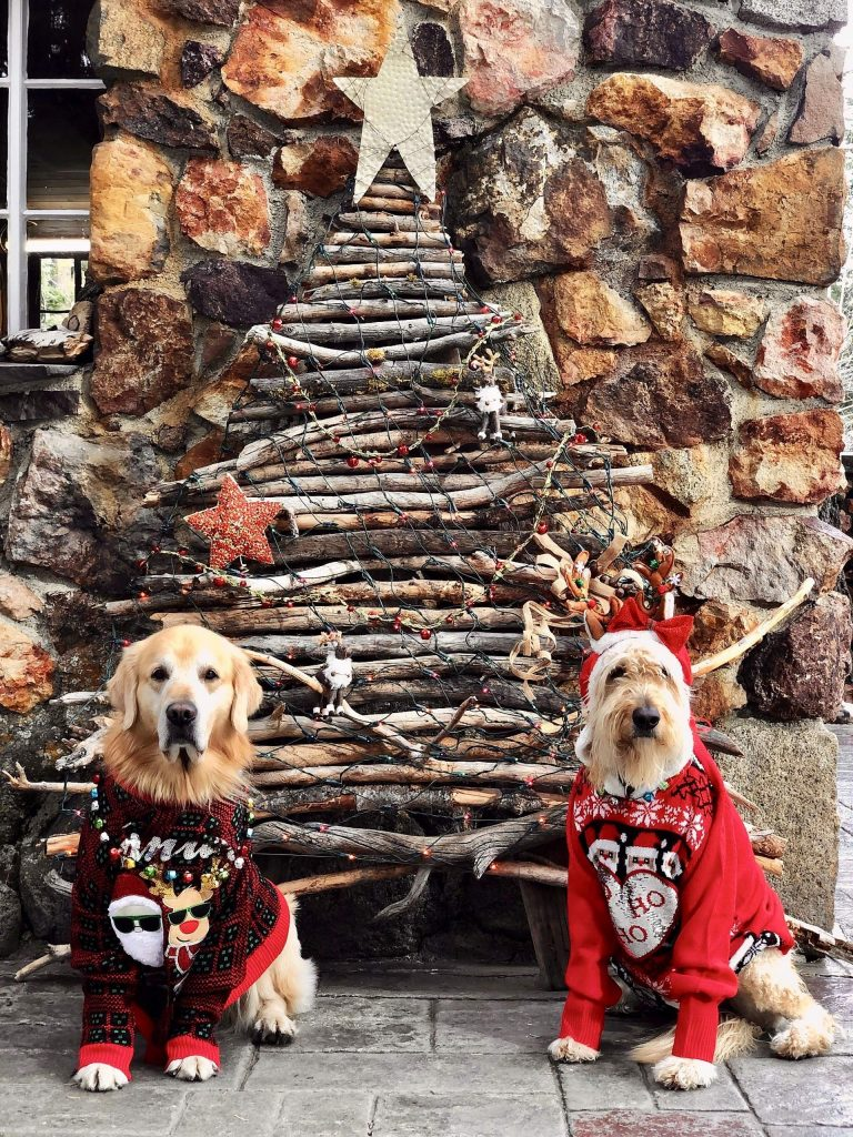 "Jaxon and Banshee with their ""stick"" Christmas tree."