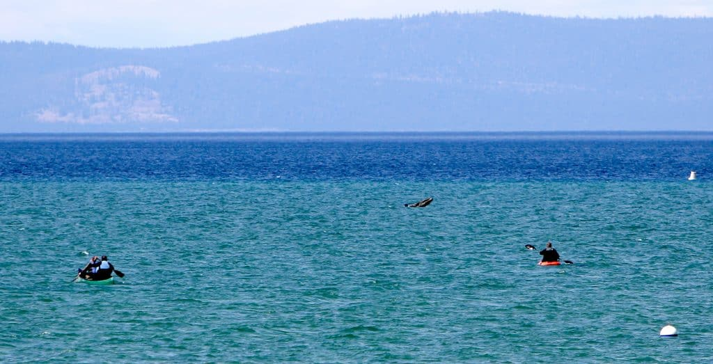 South Lake Tahoe police officers paddle out to a man yelling for help Wednesday.