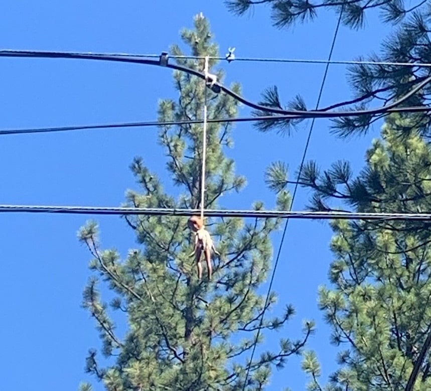 A black doll was found hanging from power lines Tuesday in South Lake Tahoe.